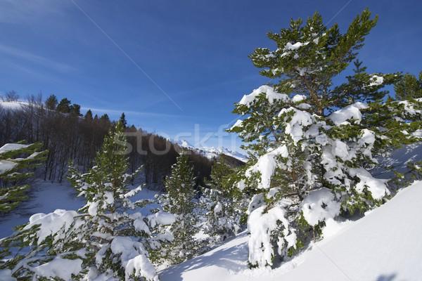 Stock photo: Winter