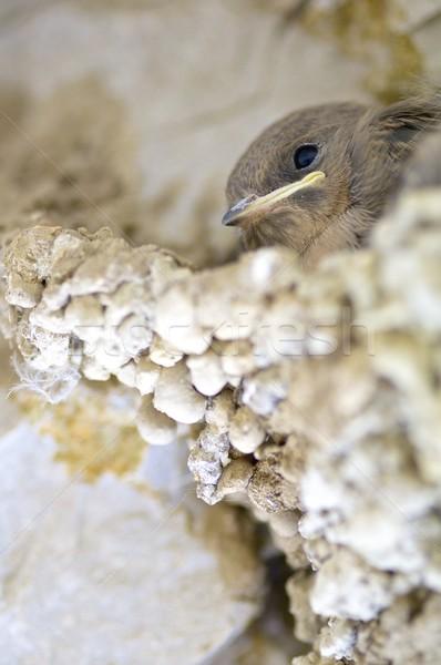 Kuş civciv tür yuva yeşil tüy Stok fotoğraf © pedrosala