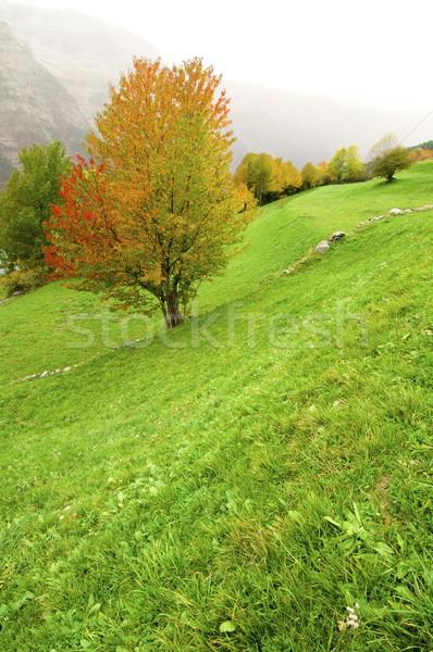 autumnal meadow Stock photo © pedrosala