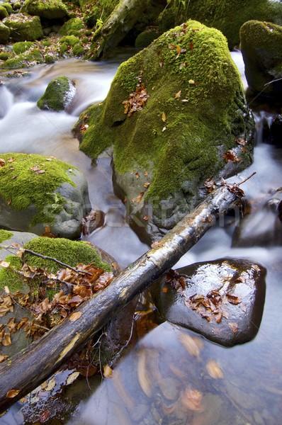 Dere ipeksi dere orman vadi ağaç Stok fotoğraf © pedrosala