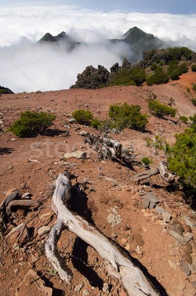 Madera wzgórza przeciwmgielne wyspa Portugalia niebo Zdjęcia stock © pedrosala