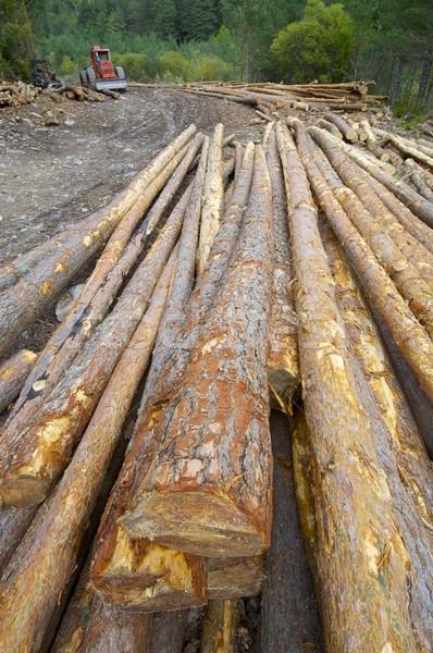 Foto stock: Escavadeira · floresta · vale · edifício · construção