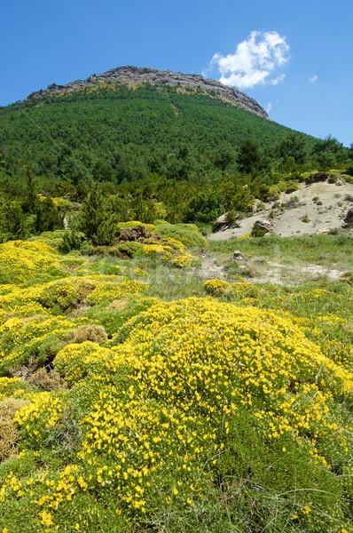 Spring Pyrenees view Stock photo © pedrosala