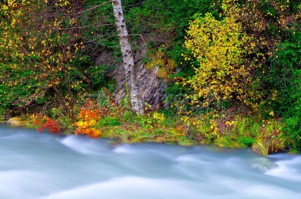 Melkachtig rivier vallei boom bos natuur Stockfoto © pedrosala