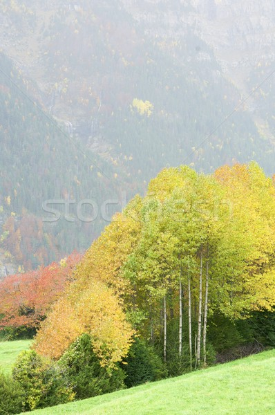 Fall forest Stock photo © pedrosala