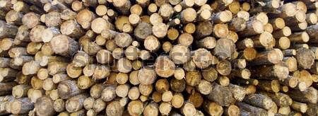 Arbres coupé bois de chauffage arbre bois Photo stock © pedrosala