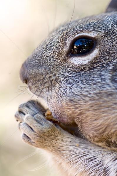 Stock photo: Chipmunk close up