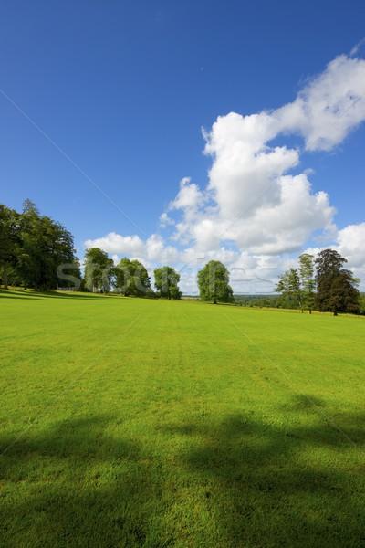 Normandia verde prado árvores França árvore Foto stock © pedrosala