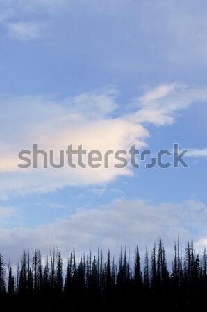 кедр лес небе облака Юта США Сток-фото © pedrosala
