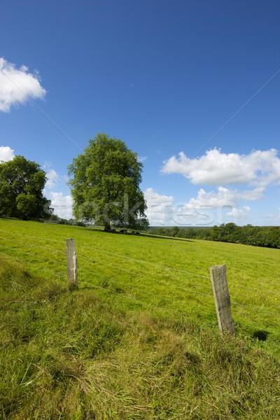 Normandia zöld legelő fák Franciaország tavasz Stock fotó © pedrosala