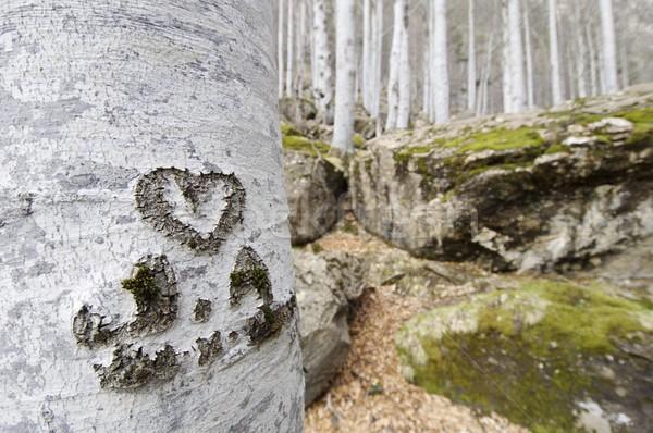Coração gravado árvore parque amor floresta Foto stock © pedrosala