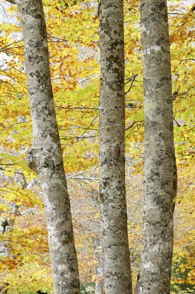 Bomen vallei boom landschap berg Stockfoto © pedrosala