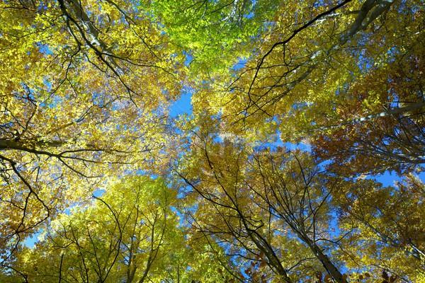 Bos natuurlijke park natuur blad Stockfoto © pedrosala