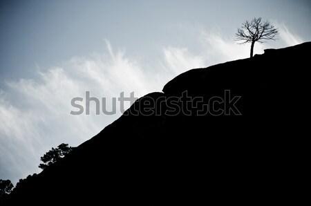 Profile tree Stock photo © pedrosala