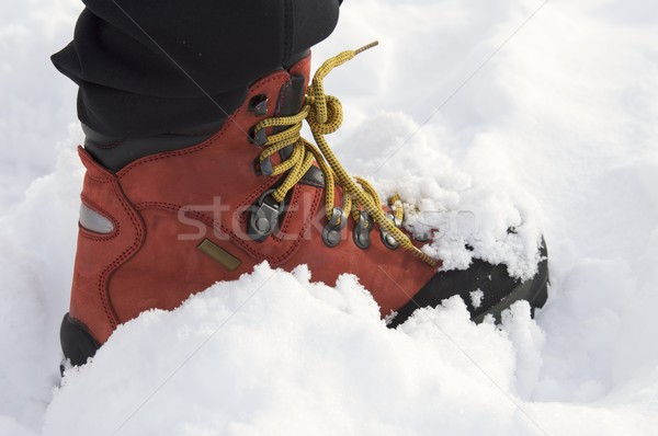 red leather boot Stock photo © pedrosala