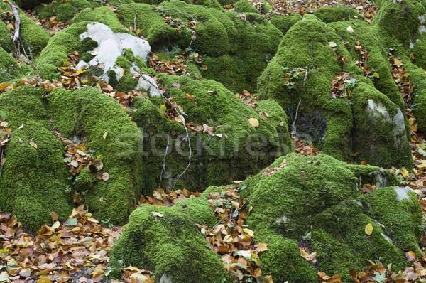 moss Stock photo © pedrosala