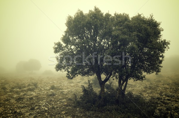 Stock photo: Cold morning
