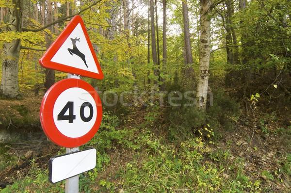 Przyrody sygnał lasu drogowego charakter drzew Zdjęcia stock © pedrosala