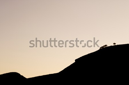 Stock photo: trees backlit