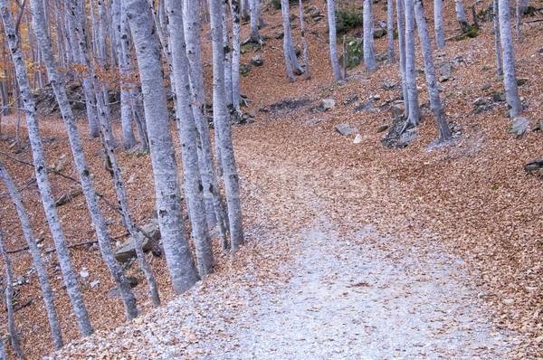 forest road Stock photo © pedrosala