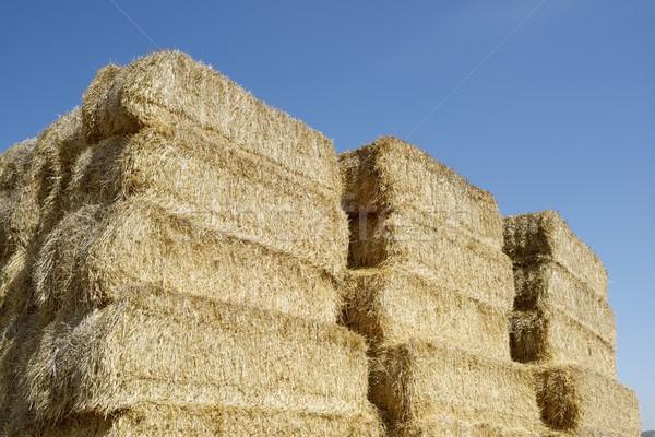Straw bales Stock photo © pedrosala