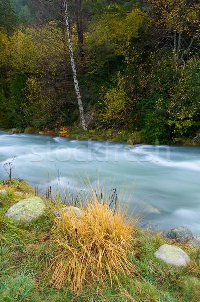 Melkachtig rivier vallei boom gras bos Stockfoto © pedrosala