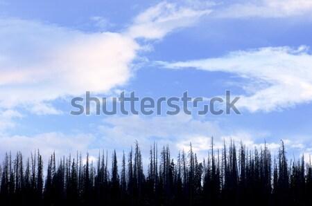 Cedro floresta céu nuvens Utah EUA Foto stock © pedrosala
