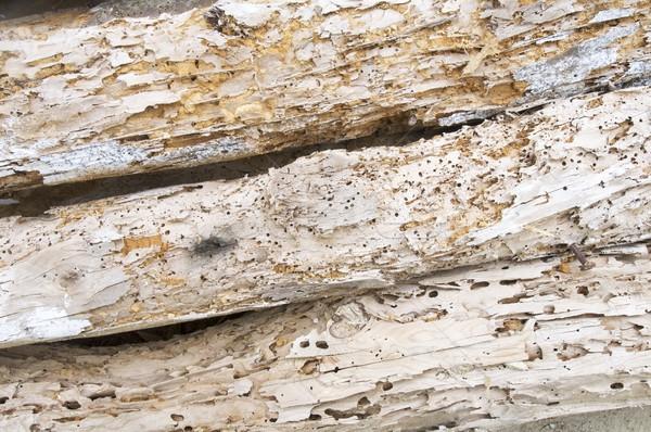 Stock photo: woodworm