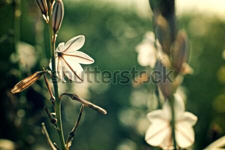 Flor silvestre diseno fondo belleza verde Foto stock © pedrosala