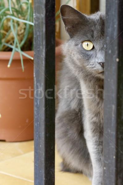Macska fej szem arc szeretet szemek Stock fotó © pedrosala