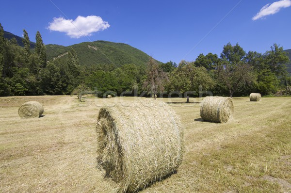 straw bales Stock photo © pedrosala