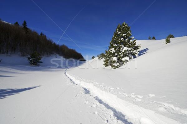 Winter Stock photo © pedrosala