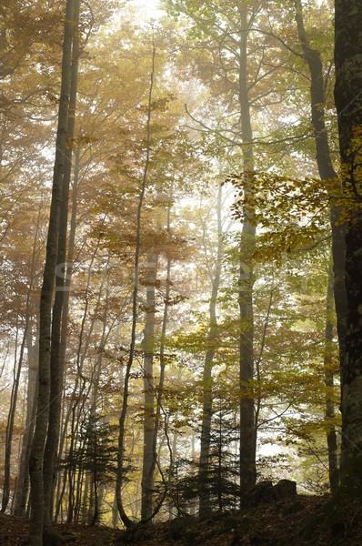 Zdjęcia stock: Lasu · jesienią · jesienny · drzew · dolinie · drzewo