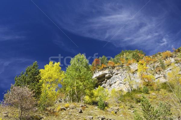 Caída melancolía forestales cielo azul parque Foto stock © pedrosala