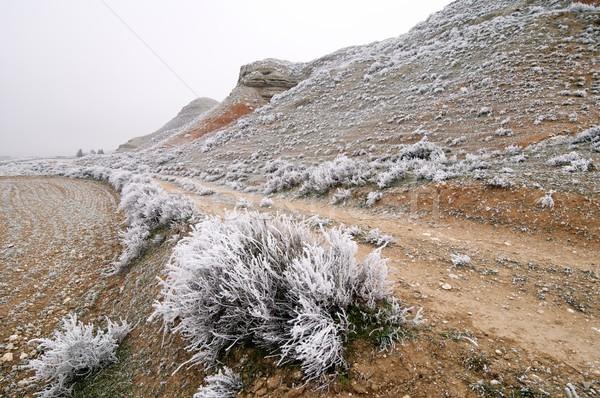 морозный пейзаж текстуры природы снега белый Сток-фото © pedrosala