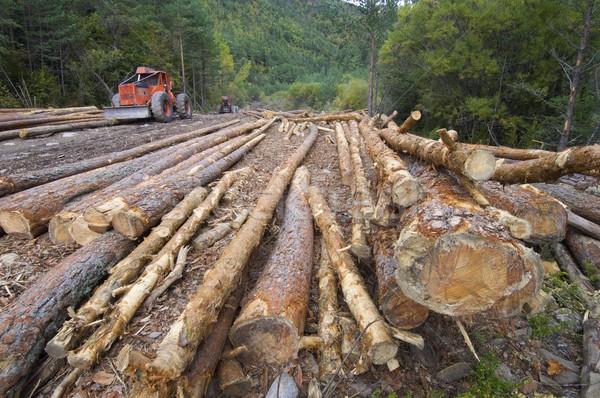 Stock fotó: Alsónadrágok · erdő · völgy · fa · fa · munka
