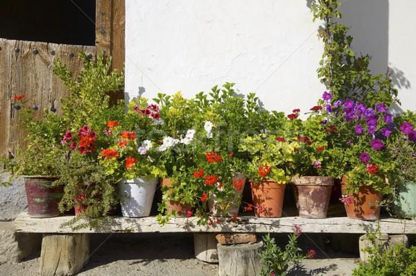 Virág falu tavasz út épület utca Stock fotó © pedrosala