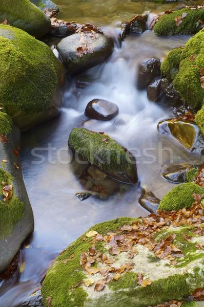 Dere ipeksi dere orman sonbahar vadi Stok fotoğraf © pedrosala