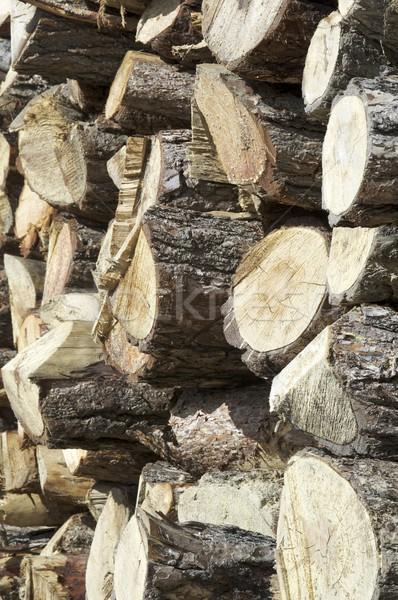 Grup çam doku ahşap arka plan ağaçlar Stok fotoğraf © pedrosala