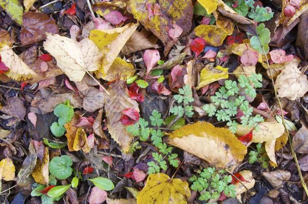 autumnal background Stock photo © pedrosala