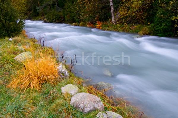 Mleczny rzeki dolinie drzewo trawy lasu Zdjęcia stock © pedrosala