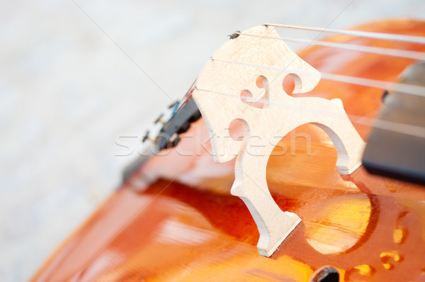 Cello closeup on paving stone Stock photo © pekour