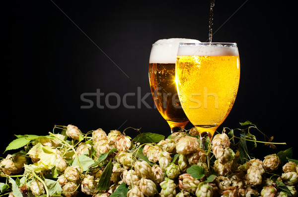 Two glasses of beer flowing with hop Stock photo © pekour