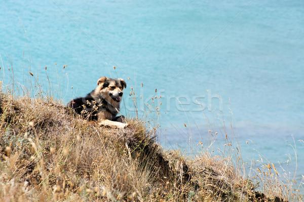 Evsiz köpek dağlar deniz sonbahar Stok fotoğraf © pekour