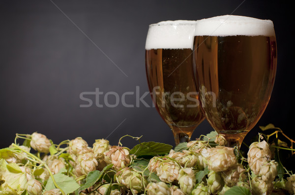 Two glasses of beer froth with hop Stock photo © pekour