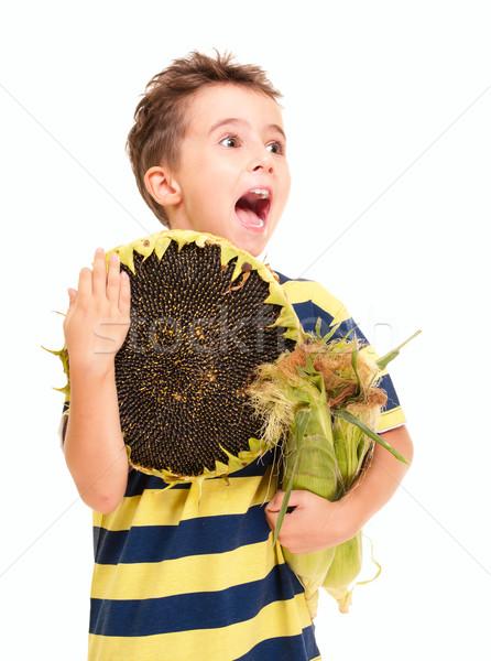 Küçük erkek mısır ayçiçeği olgun Stok fotoğraf © pekour