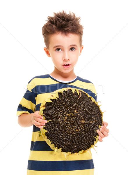 Kicsi fiú tart érett napraforgó izolált Stock fotó © pekour