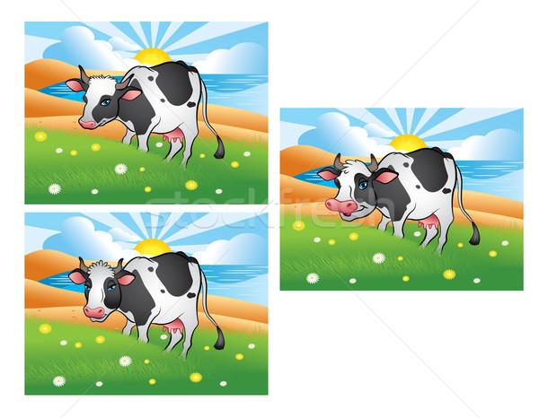 3  異なる 牛 緑 草原 実例 ストックフォト © penivajz