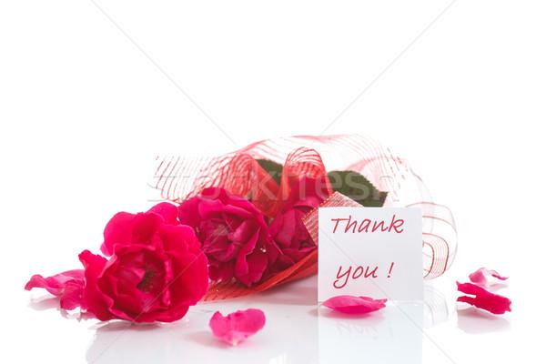 Rózsa piros hála fehér szépség anya Stock fotó © Peredniankina