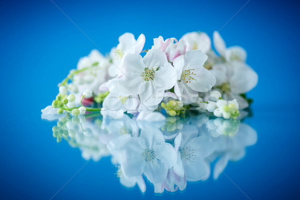 beautiful spring flowers apple Stock photo © Peredniankina